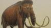 Японские ученые намерены клонировать мамонтов
