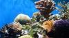 К 2050 году исчезнут 95 процентов коралловых рифов