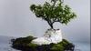 Обувь из биоразлагаемого материала создали голландские дизайнеры