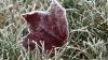 Метеорологи предупреждают:  16 и 17 апреля ожидаются заморозки