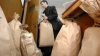 Пересчет голосов, отданных за муниципальный совет столицы, вновь приостановлен