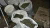 В Крузештах арестована группа, которая занималась выращиванием и сбытом конопли
