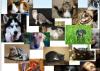 На Украине появилась социальная сеть для животных