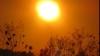20 июля - самый жаркий день за последние две недели