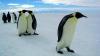 В Новой Зеландии попрощались с заблудшим пингвином