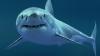 В Приморском крае России зафиксировано два случая нападения акулы на людей