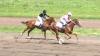 Лошадиные бега в Чадыр-Лунге
