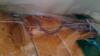 Упакованный батон с живой мышью был куплен в супермаркете