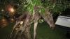 Пьяный лось на яблоне (ФОТО)