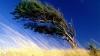 Желтый код опасности: усиление ветра утром и днем 9 сентября