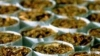 8500 пачек контрабандных сигарет были изъяты на таможне Леушены-Албица