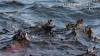 """С борта разбившегося  судна """"Рена"""" в море вытекло около 30 тонн нефти"""