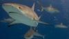 Власти Маршалловых островов решили создать гигантский заповедник для акул