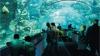 Новый огромный океанариум открывается в Москве