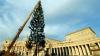 Главная ёлка Ватикана в этом году родом из  Украины