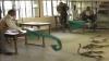 Индийские фермеры принесли три мешка со змеями налоговикам-взяточникам