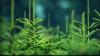 Живые елки напрокат предлагают жителям Молдовы