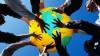 Что говорят граждане Молдовы о дружбе