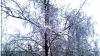 Погода на 12 января 2012