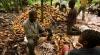 История десятилетнего раба на плантациях какао (ВИДЕО)