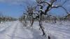 Сильные морозы, установившиеся в последние дни, нанесли ощутимый ущерб сельскому хозяйству