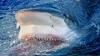 Новое нападение акулы на человека зафиксировано у берегов Австралии
