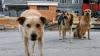 Немецкий рекламщик создал скулящий мяч в поддержку бездомных собак Украины