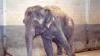 В цирке Екатеринбурга слонов согревают алкоголем