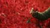 Житель Казахстана заказал в подарок супруге миллион алых роз