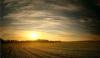 Потери в сельском хозяйстве из-за морозов достигают 80 процентов