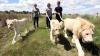Прогуляться по саванне с белыми львами предлагает отель в ЮАР
