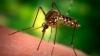 В Швеции против комаров используют боевую авиацию