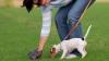 В Мексике учатся перерабатывать собачьи экскременты в бесплатный Wi-Fi
