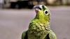 В полицейском участке потерявшийся попугай назвал свой домашний адрес