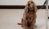 Fujitsu представила ошейник, который следит за здоровьем собаки