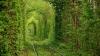 Природный тоннель любви появился на Украине