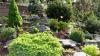 Ландшафтный дизайн на селе: в саду семьи Сырку более 30 сортов цветов, деревьев и кустарников