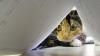 В Италии подготовлен проект закона о введении налога на домашних животных