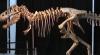 Самый древний лот выставлен на аукционе в Нью-Йорке