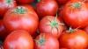 Сегодня будет собран первый урожай местных томатов