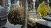 Пчелы атаковали буддийский храм в Таиланде