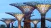 Деревья с солнечными панелями «вырастили» в Сингапуре (ФОТО)