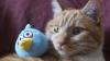 Ученые: из-за котов численность садовых птиц сокращается