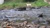 Решения по восстановлению реки Бык рассмотрят эксперты в эфире Săptămâna de vreme