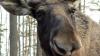 Полиция штата Юта перекрыла шоссе ради спасения двух лосей