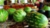 На рынках начали появляться первые арбузы. Узнайте цены