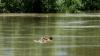 Мужчина утонул после того, как остался без жены и работы