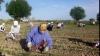 Детский труд по-прежнему активно используется в Молдове