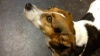 Twitter помог собаке вернуться домой