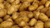 Производство картофеля сократилось в 2012 году на 30 процентов. Цена килограмма достигнет семи леев